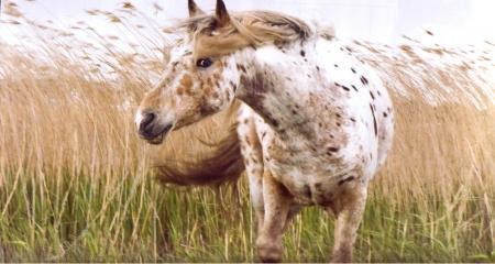 Pferdebegleitetes Coaching