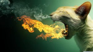 Cat-Wallpaper-768x432