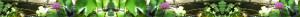 banner_lotus_1